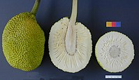 ARS breadfruit49.jpg