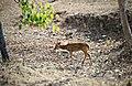 A Dear Deer.jpg