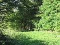 A Pheasant Feeder - geograph.org.uk - 262164.jpg