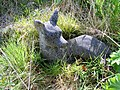 A Stone Deer at Delgatie Castle - geograph.org.uk - 828669.jpg
