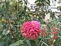 A flower 花卉 20140827.jpg