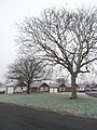 A frosty green in Beaufort Road - geograph.org.uk - 1114346.jpg