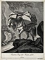 A muzzled pack-horse with a bell around its neck walking on Wellcome V0021151EL.jpg
