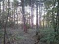 A rejtekadó erdő - panoramio.jpg