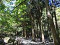 A tree-lined avenue in Ikeyama Suigen.jpg