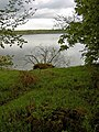 A tree has fallen in to the lake - geograph.org.uk - 1277079.jpg