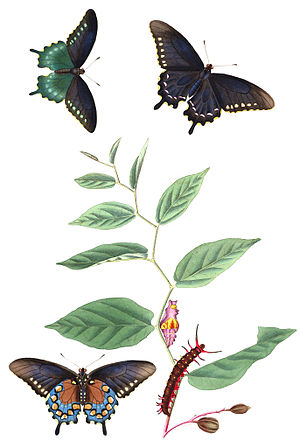 John Abbot (entomologist) - Image: Abbot V1Tab 03AA
