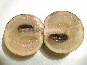 Pouteria caimito - A cross-sectioned Abiu (Pouteria caimito) fruit.