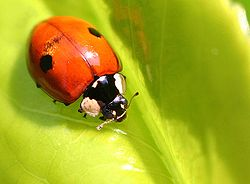 Alcuni insetti predatori sono efficaci nell'eliminazione dei parassiti sulle piante grasse e succulente quali afidi, ragnetto rosse, cocciniglie cotonose. Insetti utili per la lotta biologica che si possono anche acquistare online per una coltivazione naturale.