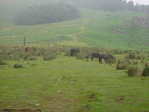 Adarra - The menhir of Eteneta on the rear slopes of Adarra