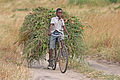 African boy transporting fodder by bicycle edit.jpg