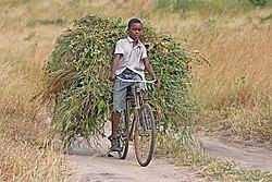 African boy transporting fodder by bicycle edit.jpg