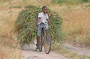 Boy with fodder on bicycle