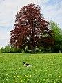 Ahrensburg, Germany - panoramio (2).jpg