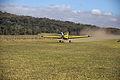 Air Tractor decolando na pista de grama.jpg