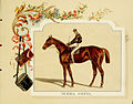 Album of celebrated American and English running horses (Plate 6) (6011940851).jpg