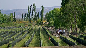 Economy of Argentina - Vinyard in Mendoza Province. The country is the fifth largest producer in the world.