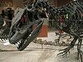 Allosaurus (5642711533).jpg