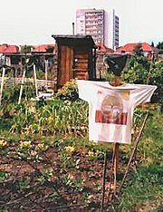 A typical allotment plot, Essex, England