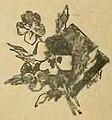 Almanaque de las portenas 1898 (page 62 crop).jpg