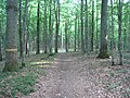 Alytus, Lithuania - panoramio (17).jpg