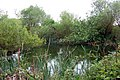 An overgrown pond (3) - geograph.org.uk - 1302162.jpg
