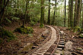 Anbo Forest Railway 03.jpg