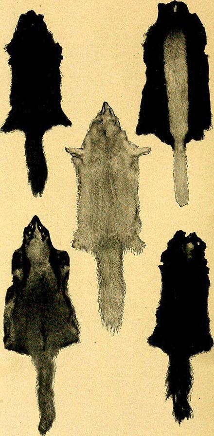 skunkfell - wikiwand, Hause ideen