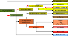 """""""Représentation graphique de la classification phylogénétique"""""""