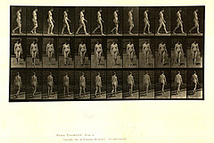 Animal locomotion. Plate 13 (Boston Public Library).jpg