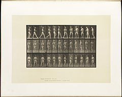 Animal locomotion. Plate 355 (Boston Public Library).jpg
