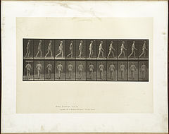 Animal locomotion. Plate 562 (Boston Public Library).jpg