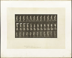 Animal locomotion. Plate 77 (Boston Public Library).jpg