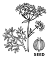 Anise (PSF).png