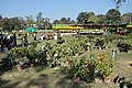 Annual Flower Show - Agri-Horticultural Society of India - Alipore - Kolkata 2013-02-10 4765.JPG