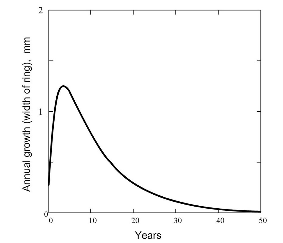 Annual growth of the wood (second typical form of the growth function)