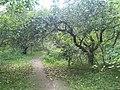Apple trees in Bitsa Park, Moscow 02.jpg