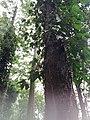 Araku Valley coffee plantations3.jpg