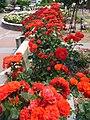 Aramaki rose park03s2400.jpg
