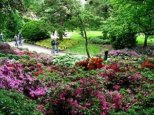 Wojsławice Arboretum - Wojsławice Arboretum