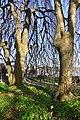 Arboretum Zürich 2011-04-10 18-05-54.JPG