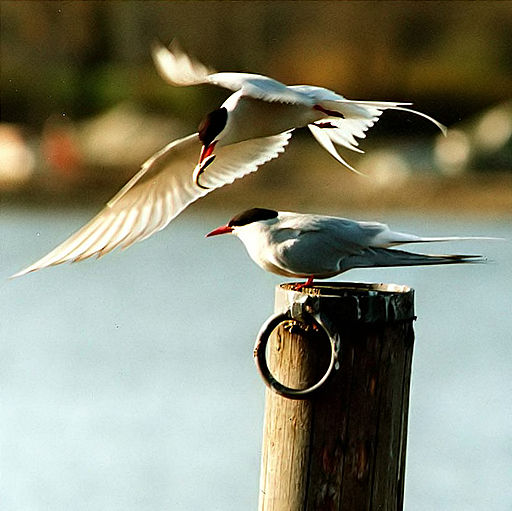 Migratory Birds in Mumbai