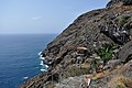 Around the parking space above Puerto de Puntagorda, La Palma, Canary Islands, 2015 - panoramio.jpg