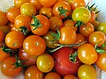 Assorted Tomatoes (15932484353).jpg