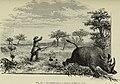 Au Kilima-Ndjaro (1914) (14596409738).jpg