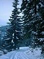 Auf der Heide - Lichtenhainer Weg im Winter - panoramio.jpg