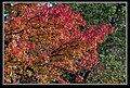 Autumn Leaves begin to fall-046 (5704305321).jpg