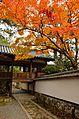 Autumn foliage 2012 (8252587795).jpg