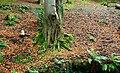 Autumn leaves, Crawfordsburn - geograph.org.uk - 1501873.jpg