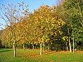 Autumn leaves - geograph.org.uk - 926111.jpg